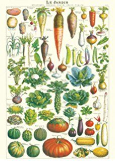 "Cavallini & Co. Le Jardin Decorative Paper Sheet 20""x28"""