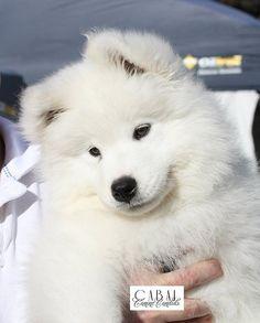 Teddy at 11 weeks