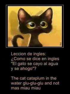 "Lesson in English: How do you say ""The cat fell down in the water and drowned?"" Strange translation! #compartirvideos #imagenesdivertidas #watsappss"