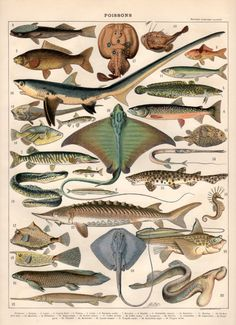 Colorful Fish 1897 Antique Print Vintage Lithograph by Craftissimo, €18.00