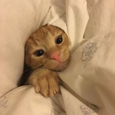 Peekaboo! My kitten Auggie. by nintendollparts. What you think about?