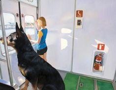 Девушка и её гигантская собака