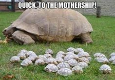 QUICK! To the Mothership!