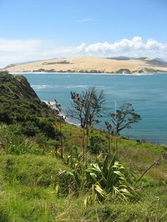 Hokianga Harbour, Northland, New Zealand South Island, Island Beach, New Zealand Adventure, New Zealand Houses, Kiwiana, Camping Spots, Dream City, British Isles, Pacific Ocean