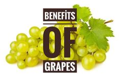 Benefits of grapes, minerals and vitamins in the abundant amount of vitamins are big enough to negate health. We can evaluate it with the help of the grape brain health, the digestive system, the skin health and protection from many diseases. Wholesale Food, Food Suppliers, Brain Health, Abundance, The Help, Minerals, Benefit, Vitamins, Canning