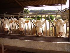 Why Ag-Gag Laws Are a Threat to Us All   One Green Planet