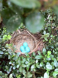 Nest in nature.