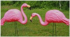 10 X-LARGE PINK FLAMINGO 3-DIMENSIONAL YARD ORNAMENTS by RINC. $30.95. Flamingos stand about 27 inches tall. The birds are about 17 inches from tail to beak and both are about 3-1/2 inches wide. Each flamingo comes with 2 black metal legs, eyes that wiggle as though they are watching you, beautiful painted beaks and the detailed feathers on these birds are full of texture molded in. 5 with their heads in an upward position and 5 with their heads in a downward ...