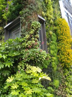 Vertical Garden, Athenaeum Hotel, Piccadilly, London