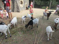 Děti a kozy  - Park Mirakulum - Milovice