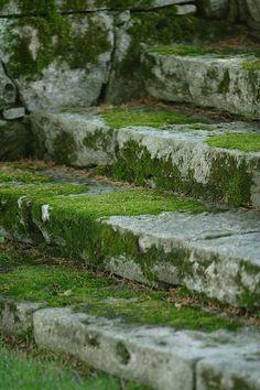 Garden Moss on steps, beautiful, timeless, a sort of a growing patina. Just love moss!