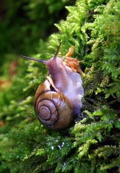 Snail - Great Smoky Mountains National Park/ looks like caramelized glass. Song Of The South, Great Smoky Mountains, Woodland Animals, Amazing Nature, Snail, Animals Beautiful, Mother Nature, Animals And Pets, National Parks