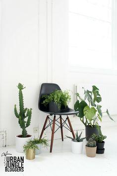 Ahora puedes elegir el tono de pata que mejor vaya con tu decoracion. Color Encino, Nogal o Negro, solo en Lasddi.com