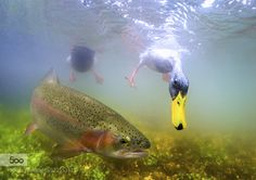 Duck photo bomb by mpcolley #underwater #500px
