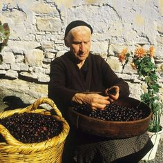 Our Olives are picked and sorted by hand.