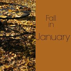 Fall in January- This is why we live here!