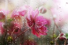 dontcallmebetty:    prettylittleflower:    Flowers Under the Rain (by Olga NZ)