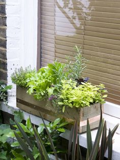 Make a Windowbox of Herbs and Lettuce    Growing herbs and salads in a windowbox provides a fresh supply close to the kitchen, and by making your own box, you can ensure it fits your space perfectly. All you need are some simple tools and a few basic carpentry skills.
