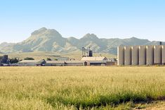 My Back Yard. sutter buttes | Sutter Rice Company and Sutter Buttes