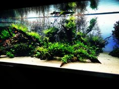The Beauthy, Armony & Passion for Nature Aquarium World