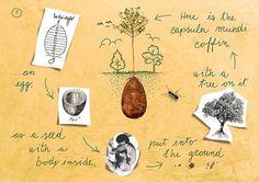 Capsula Mundi, capsule funéraire, arbre mort