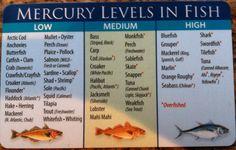 Best 6 ounce albacore tuna recipe on pinterest for Lowest mercury fish