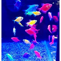 Interested in a new fish? Decide which one is right for you: (Photo Credit: alexa_mashay) Community Fish Tank, Types Of Fish, Fish Tanks, Just Giving, Give It To Me, Cute Animals, This Or That Questions, Pets, Photo Credit