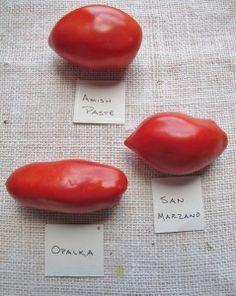 Heirloom Tomato Varieties: