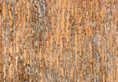old rough orange wood background texture | www.myfreetextures.com | 1500+ Free Textures, Stock Photos & Background Images