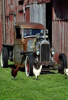 Chickens by old truck in front of the barn