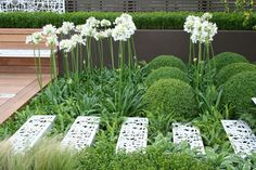 Contemporary Contemplation Garden By garden designer OneAbode Ltd. I adore the greenery and white agapanthus.