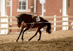 Lunging: For the rider & horse, out of control, and other problems! Lunging tips!