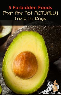 Dogs can share many wonderful foods with us. Other foods that we love, though, are toxic. Toxic Foods For Dogs, Fruits For Dogs, Dog Nutrition, Animal Nutrition, Dog Treat Recipes, Raw Food Recipes, Dog Health Care, Women's Health, Making Homemade Pizza