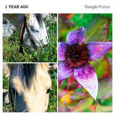 c o m: memories Dandelion, Memories, Flowers, Plants, Memoirs, Souvenirs, Dandelions, Plant, Taraxacum Officinale
