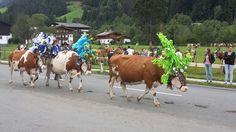 Ein erfolgreicher Almsommer geht zu Ende. Austria, Animals, Summer Recipes, Animales, Animaux, Animal, Animais