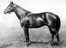 Sir Gallahad III(1920)(Colt)Teddy- Plucky Liege By Spearmint. 4x5 To Galopin, 5x5 To Macaroni & Lord Clifden. Won Prix Daphnis(Fr), Poule D'Essai Des Poulains(Fr), Prix Jacques Le Marois(Fr). Leading Sire In U.S. 4 Times, Leading Broodmare Sire In U.S. 12 Times. Sire Of Gallant Fox.