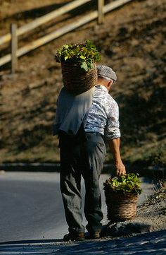 returning from Market... Isnello Sicily