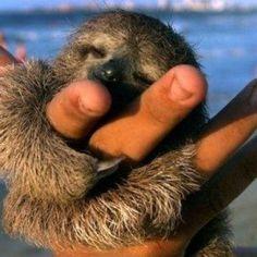 Sloths♥