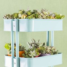 Create a fun succulent planter in an Ikea cart! Step-by-step photo instructions!