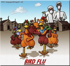 There has been a lot of talk about the bird flu, also known as avian influenza, in recent years. Description from doctorbulldog.wordpress.com. I searched for this on bing.com/images