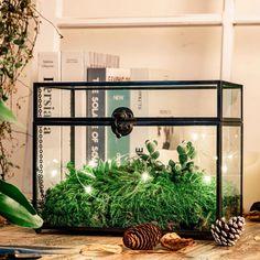 black terrarium Glass Terrarium, Ladder Decor, Handmade, Home Decor, Hand Made, Decoration Home, Room Decor, Home Interior Design, Home Decoration
