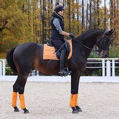 """1,187 Likes, 12 Comments - H O R S E S & F A S H I O N (@horsesandglamour) on Instagram: """"Alvast voor halloween, oranje! Wat vinden jullie van deze kleur? • by: @onlyequine__ (Tack:…"""""""