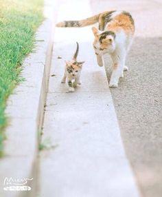 Awwwww the mommy cat is helping her kitten walk