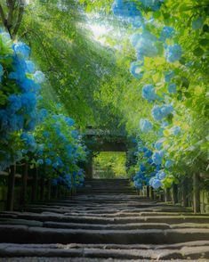 Hydrangea, Meigetsuin, Kamakura, Japan by number_shiiix Beautiful World, Beautiful Gardens, Beautiful Places, Landscape Photography, Nature Photography, Hydrangea Bloom, Hotarubi No Mori, Image Nature, Jolie Photo