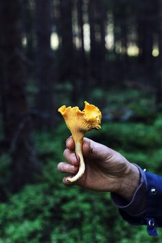 Chanterelles in the garden? Wild Edibles, Autumn Inspiration, Nature Pictures, Country Life, Life Is Beautiful, The Great Outdoors, Woodland, Stuffed Mushrooms, In This Moment