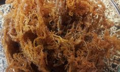 Irish moss its raw, dried form.  Reported to contain 15 of the 18 most vital nutrients  the body needs.  An excellent hair and body moisturizer.