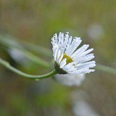 • F L O W E R  F O R  Y O U • . . . . . . #flowers #flower #instagreen #bugslife #dew #dewdrops #instanature #naturelovers #natureofpoland #nature #macrophotography