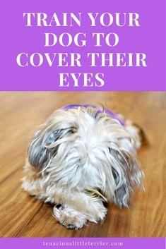 dog training,teach your dog,dog learning,dog tips,dog hacks Dog Training Classes, Puppy Training Tips, Training Your Dog, Training Collar, Brain Training, Dog Care Tips, Pet Care, Puppy Care, Pet Tips