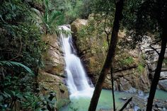 El Yunque & Coca Falls; I want to go here while im in Puerto Rico!
