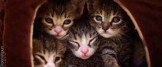 Abandoned Kittens Are Now Raising Awareness For Pet Adoption, And Lookin' Cute Doin' It